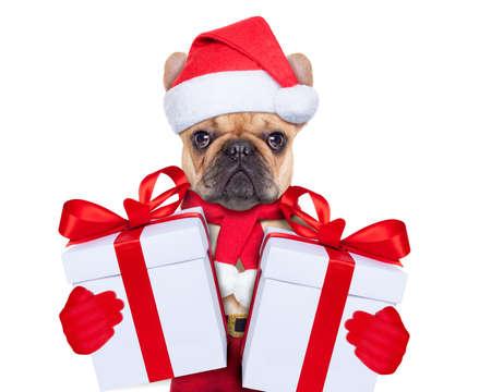 Weihnachtsmann Weihnachten Hund trägt einen Hut mit einem Weihnachtsgeschenk oder Geschenk für Sie Standard-Bild