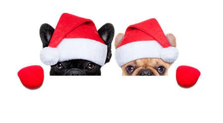 Pareja de Santa claus de dos perros que llevaba un sombrero detrás de un cartel blanco en blanco, aislado en fondo blanco Foto de archivo