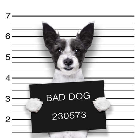 mugshot dog holding a black banner or placard Stock Photo