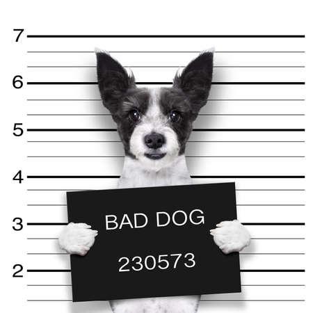 perro policia: perro ficha policial, con un cartel negro o cartel Foto de archivo