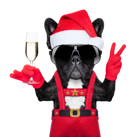 santa claus dog toasting cheers with champagne glass and victory or peace fingers, isolated on white background photo