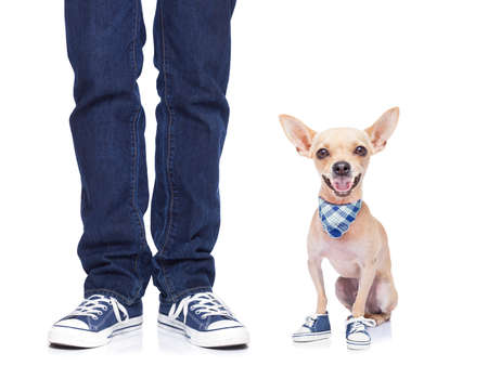 dog owner with dog both wearing sneakers, ready for a walk together,dog very happy,  isolated on white background photo