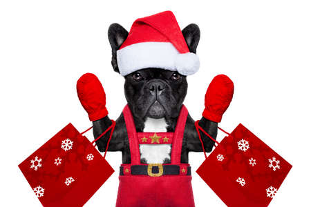 Santa claus christmas dog wearing a hat , isolated on white background photo
