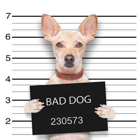 mugshot dog holding a black banner or placard photo