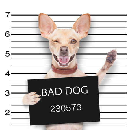 mugshot dog holding a black banner or placard, and waving his paws and blinking eye