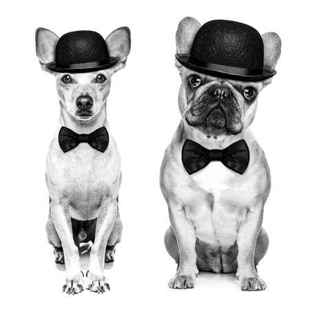 コメディアン、山高帽、白い背景上に分離されて黒のネクタイを着て犬の古典的なカップル。黒と白のレトロな外観に