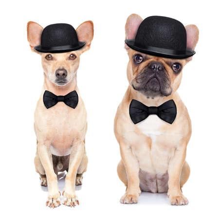 clown cirque: com�dien couple classique de chiens, coiff� d'un chapeau melon, une cravate noire et une moustache, isol� sur fond blanc Banque d'images