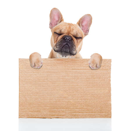 lost,homeless  dog with cardboard ,isolated on white background, closed eyes looking so sad photo