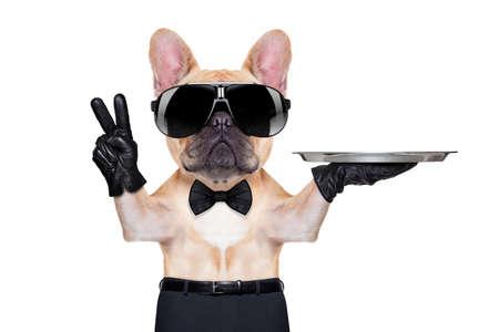 mesero: bulldog franc�s con paz o la victoria dedos la celebraci�n de una bandeja de servicio, dispuesto a ayudar, aislado en fondo blanco