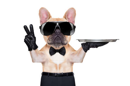 french bulldog with peace or victory fingers holding a service tray , ready to help, isolated on white background