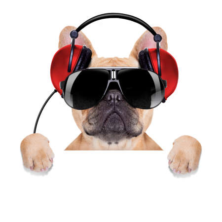 dj bulldog dog with headphones listening to music behind a white banner or placard , isolated on white background