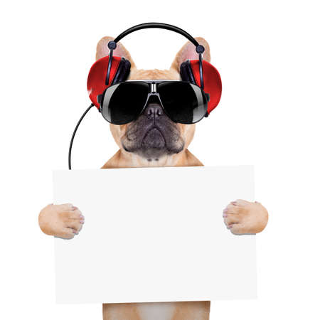 dj bulldog dog with headphones listening to music holding a white banner or placard , isolated on white background