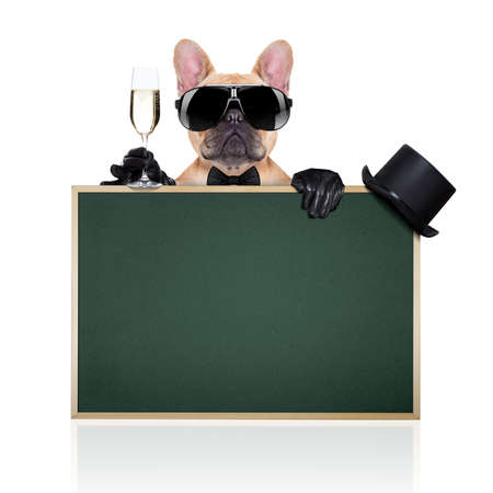 french: french bulldog holding a  glass of champagne  behind a  green big blackboard, ready to toast,  isolated on white background