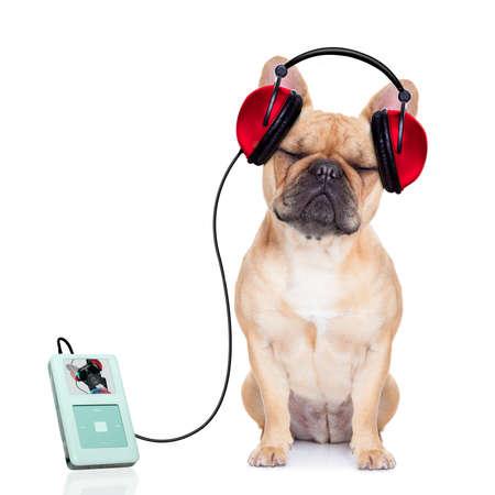 audifonos: perro bulldog francés escuchando música, mientras se relaja y disfruta del sonido, aislado en fondo blanco Foto de archivo