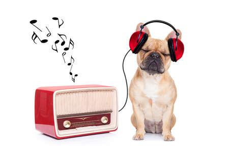 vendimia: perro bulldog cervatillo escuchando música, mientras se relaja y disfruta del sonido de una vieja radio retro, aislado en fondo blanco
