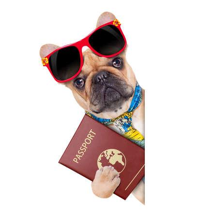 bulldog fulvo com passaporte imigrar ou pronto para um per�odo de f�rias, al�m de um cartaz branco ou banner, isolado no fundo branco
