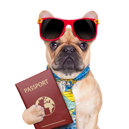 fawn bulldog met paspoort immigratie worden of klaar voor een vakantie, geïsoleerd op een witte achtergrond Stockfoto