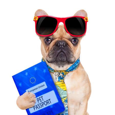 viajes: bulldog cervatillo con inmigrante pasaporte o listos para unas vacaciones, aisladas sobre fondo blanco