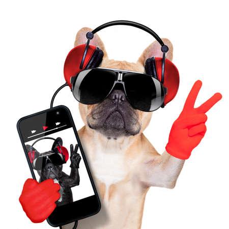 buldog: adular bulldog francés escuchando un reproductor de música, con la paz o la victoria los dedos, aislado en fondo blanco