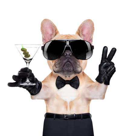 french bulldog with peace or victory fingers holding a martini , ready to toast,  isolated on white background Stock Photo