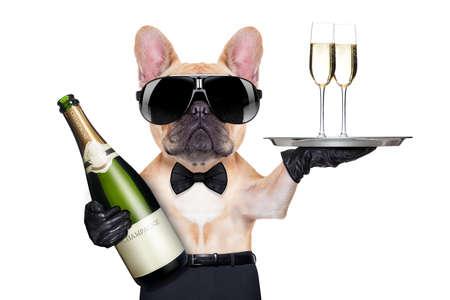 Französisch Bulldog mit Champagner-Flasche und hielt ein Service Tablett mit Gläsern, bereit, Toast, isoliert auf weißem Hintergrund