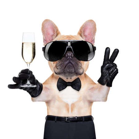 french: french bulldog holding a  glass of champagne  with peace or victory fingers , ready to toast,  isolated on white background Stock Photo