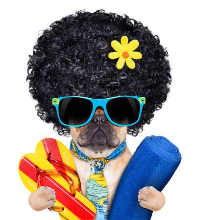 fawn bulldog with flip flops and towel , wearing a tie and sunglasses, isolated on white background photo