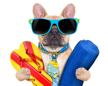 sonnenbrille: Kitz Bulldogge mit Flip-Flops und Handtuch, trägt eine Krawatte und Sonnenbrille, isoliert auf weißem Hintergrund Lizenzfreie Bilder