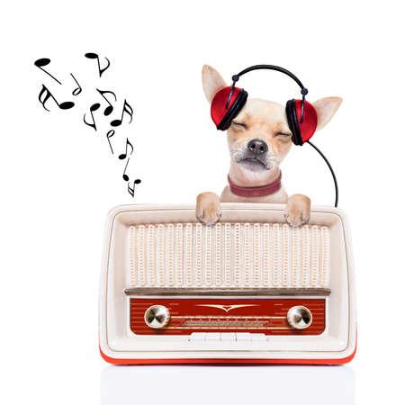 O Chihuahua Musica cao chihuahua ouvir musica