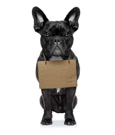 lost,homeless  dog with cardboard hanging around neck, isolated on white background photo