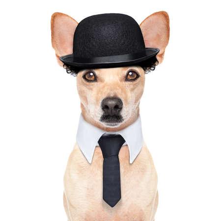 payasos caricatura: cómico clásico perro terrier, llevaba un sombrero, lazo negro y bigote, aislado en fondo blanco Foto de archivo
