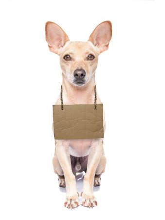 hanging around: perdido, perro sin hogar con cart�n colgando alrededor del cuello, aislados en fondo blanco