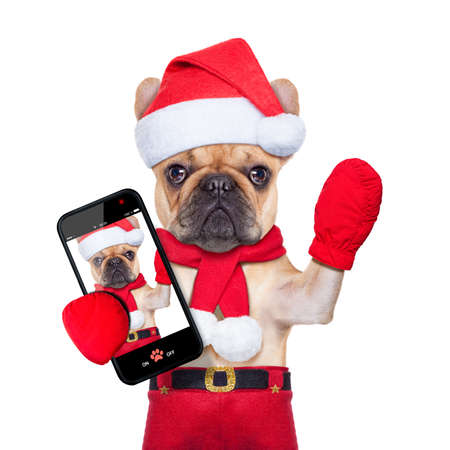 fawn bulldog dog  as santa claus on christmas , taking a selfie and waving with hand, isolated on white background photo