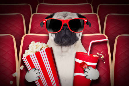 funny movies: dog watching a movie in a cinema theater, with soda and popcorn wearing glasses Stock Photo