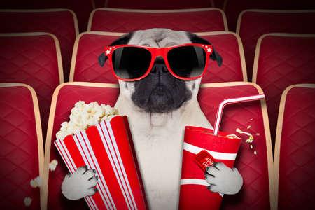 palomitas: ver una pel�cula en una sala de cine de perro, con refrescos y palomitas de ma�z usando anteojos Foto de archivo