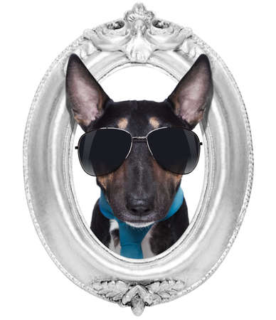 miniature pit bull bullterrier  dog portrait in a wooden retro old frame , isolated on white background photo