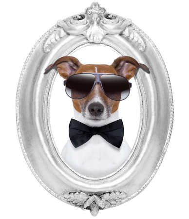animal photo: jack russell dog portrait in a wooden retro old frame , isolated on white background