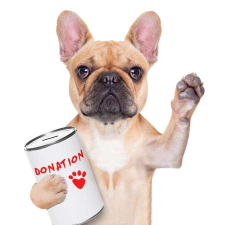 franse bulldog hond met een donatie kan, geld in te zamelen voor het goede doel, geïsoleerd op witte achtergrond Stockfoto