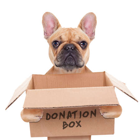 raising cans: french bulldog dog holding a donation box, isolated on white background