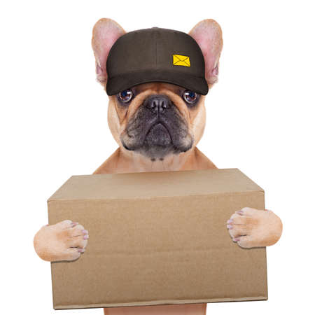 postman  french bulldog holding a shipping box , isolated on white background Stockfoto