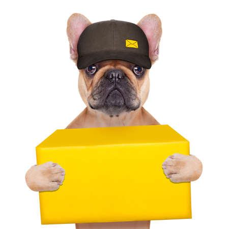 postman  french bulldog holding a yellow shipping box , isolated on white background