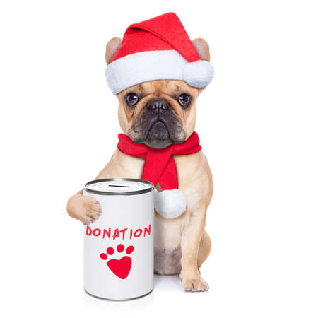 lonesome: french bulldog dog with a donation can , collecting money for  charity, as a winter edition , isolated on white background
