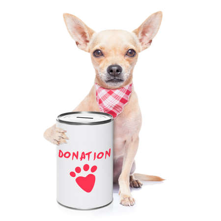 charity: chihuahua dog with a donation can , collecting money for  charity, isolated on white background Stock Photo