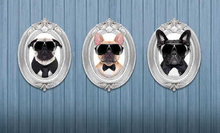 cool backgrounds: three cool dogs in  frames hanging on a wooden blue wall