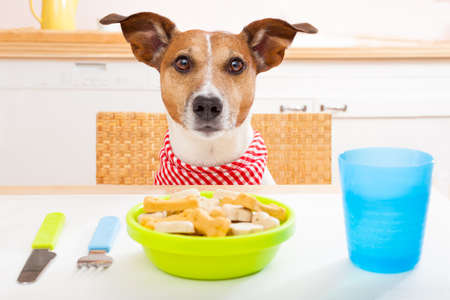 animal feed: jack russell dog sitting at table ready to eat a full food bowl as a healthy meal, tablecloths included Stock Photo