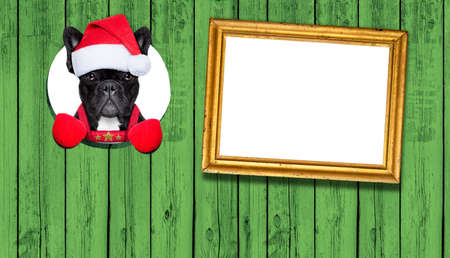 december: french bulldog dog dressed as santa claus behind a wood wall as a christmas december decoration with empty space as banner Stock Photo