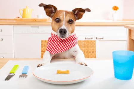 jack russell hond aan tafel zitten klaar om een een bijna lege plaat als een dieet lichte maaltijd te eten, inclusief tafelkleden
