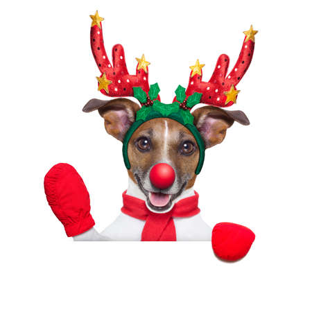 santa moose: reindeer dog behind a blank banner with a red nose  and waving hand isolated on white background