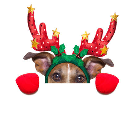 reindeer dog behind a blank banner as a christmas theme, isolated on white background photo
