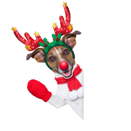 animals and pets: reindeer dog behind a blank banner with a red nose  and waving hand isolated on white background